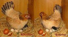 Coucou du haïku : Les nids, les oiseaux au printemps