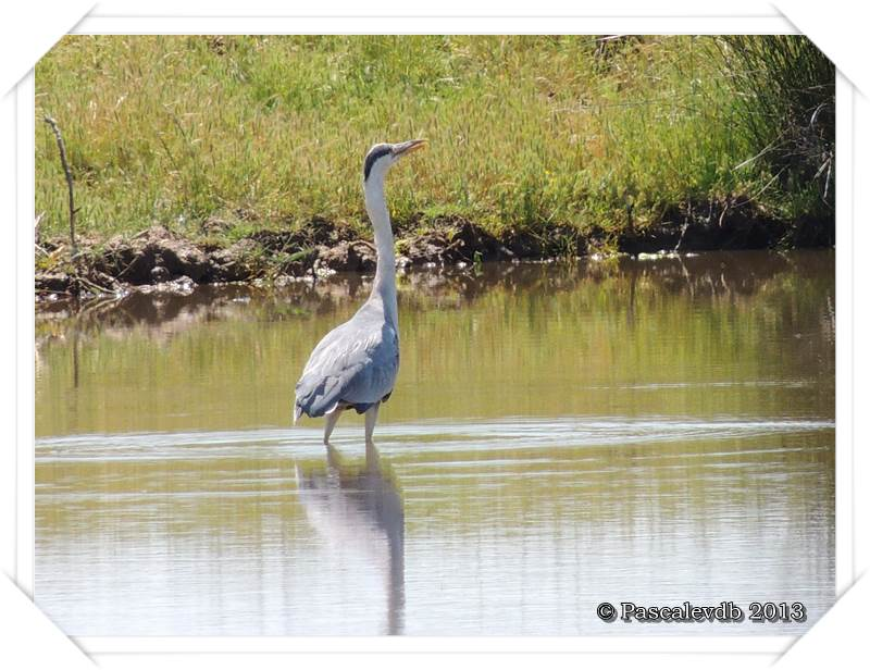 Grands et petits à la réserve ornitho du Teich - 6/15