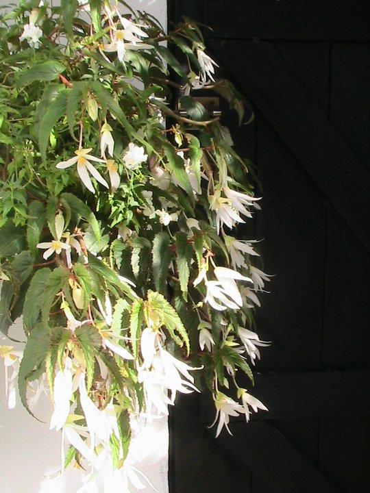 graines de fleurs a semer