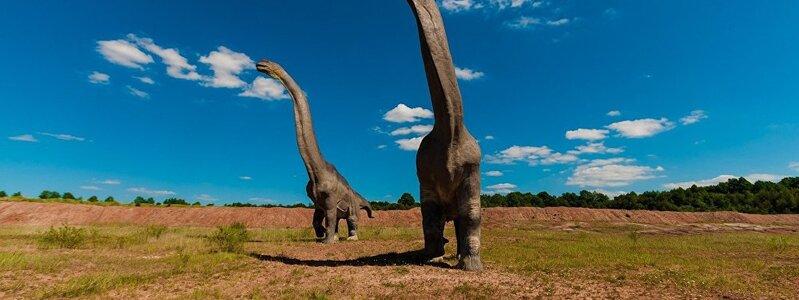 Des scientifiques décrivent pour la 1re fois le plus gros dinosaure de la Terre