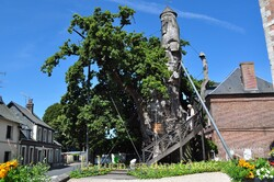 Le chêne-chapelle d'Alluviale-Bellefosse