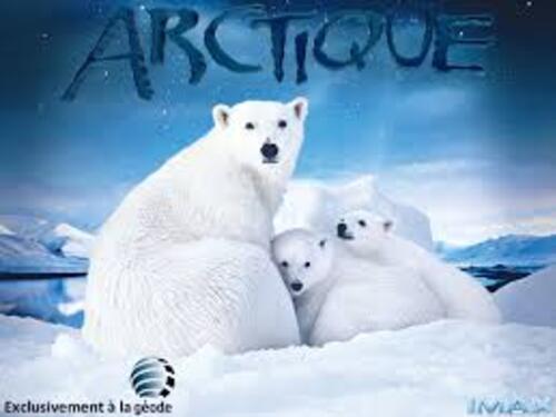 Défi n° 157 de Mildéfis - L'Artique