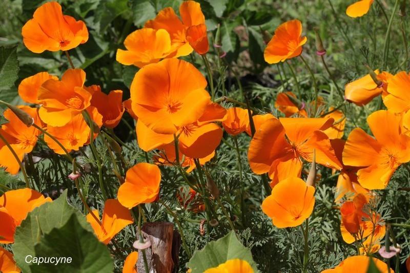 jardin-de-juin 8644