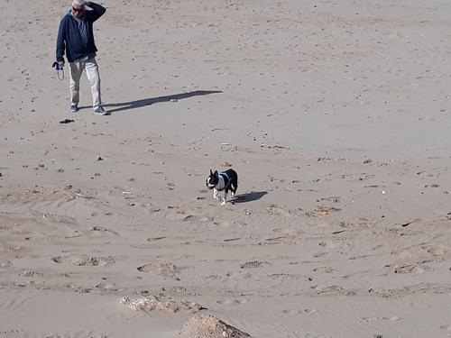 Il adore courir sur la plage.