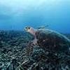 tortue de mer 2.jpg