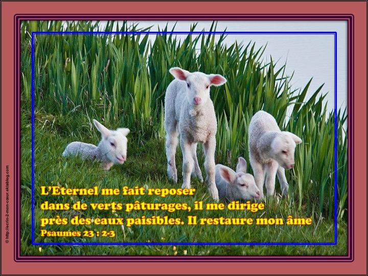 L'Eternel prend soin de nous / Repos, direction et restauration - Psaumes 23 : 2-3