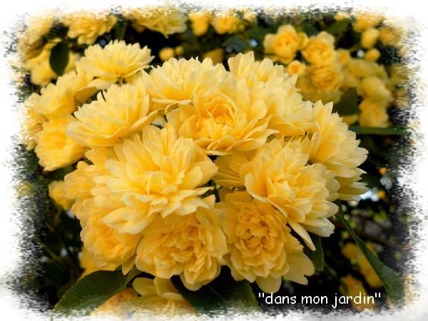 Banks-bouquet.jpg
