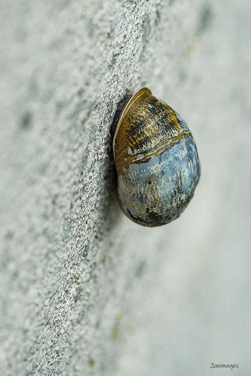 Petit escargot porte sur son dos sa maisonnette ...