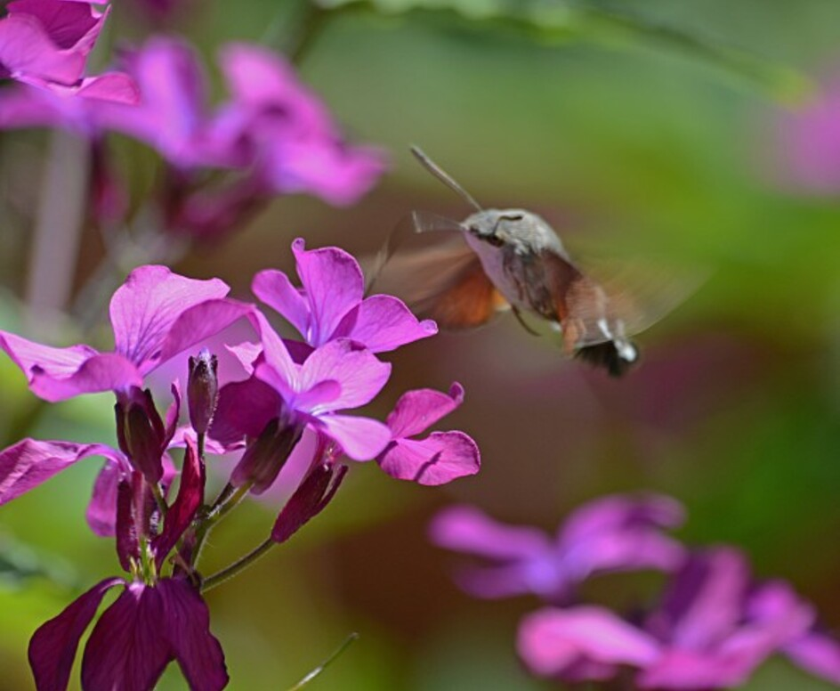 Insectes-papillons-5-2339_modifie-1.jpg