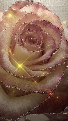 Les lys et les roses...Jésus....