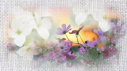 fond d'écran printemps ete