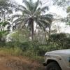 Togo Piste dans la forêt au milieu des caféiers
