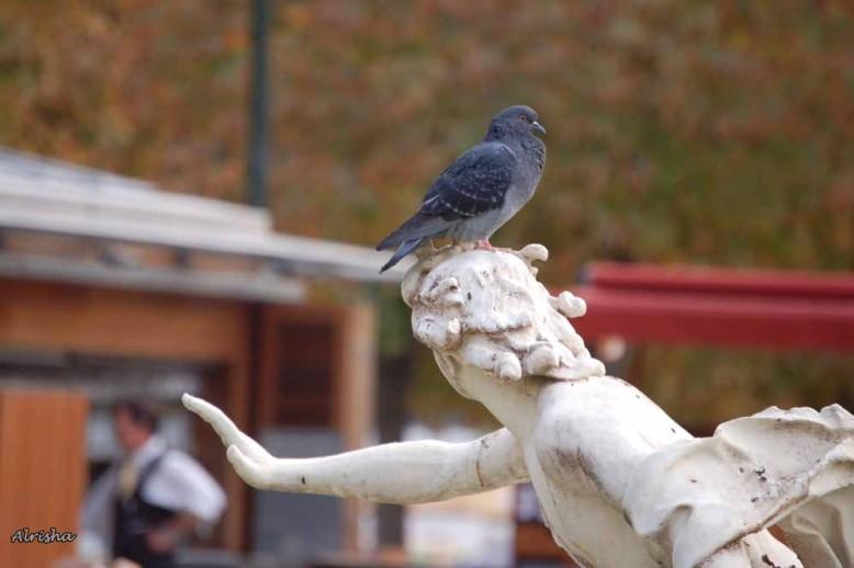 Sculptures 4710 ob