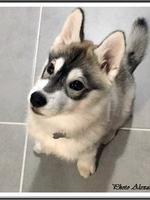 Nala (presque 3 mois)
