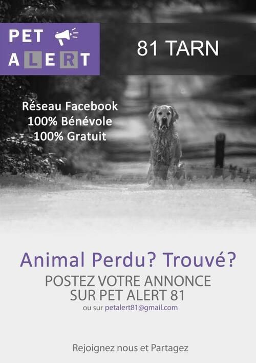Pet Alert 81