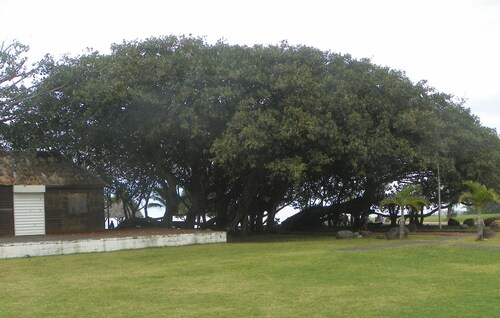 Balade à Grand Bois
