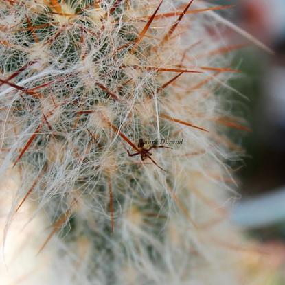 Araignée n°6 - Trop petite pour être identifiée