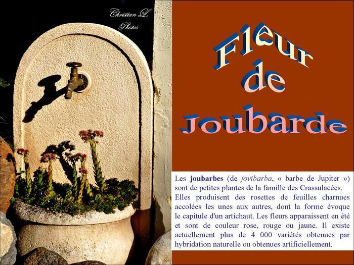 La Joubarde...