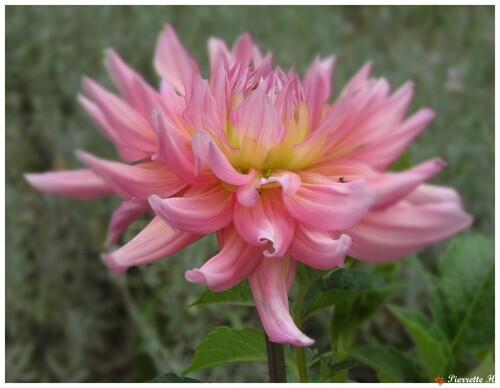 Fleurs d'été au jardin