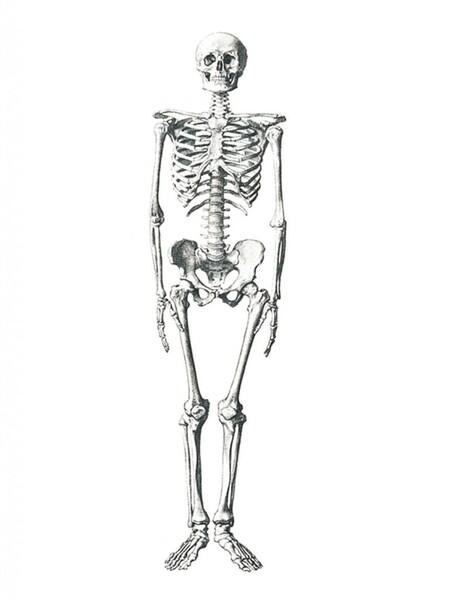 19 faits surprenants sur le corps humain
