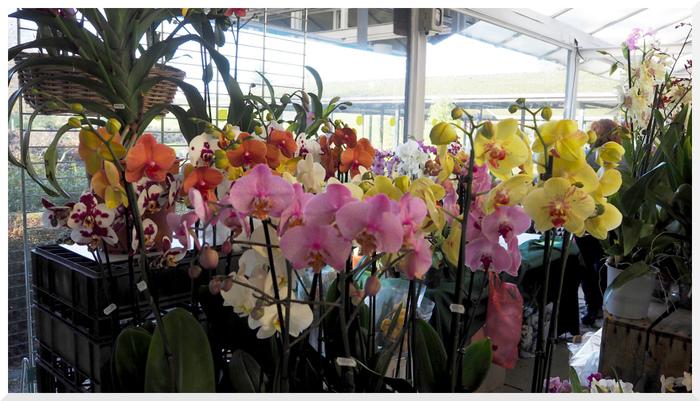 Expo-vente d'orchidées à Vincennes