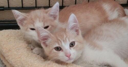 2 chats frère et sœur réunis grâce à l'amour de leurs maîtres