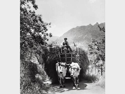 08 - Des Vaches et la vie quotidienne