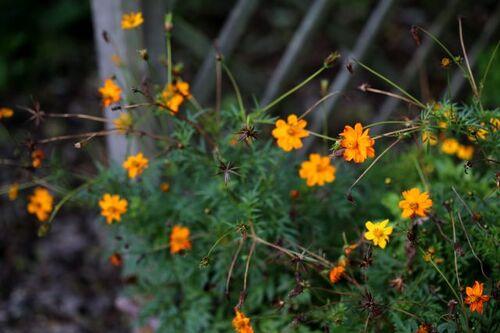Roseraie - Nettoyage et travaux d'automne (1)