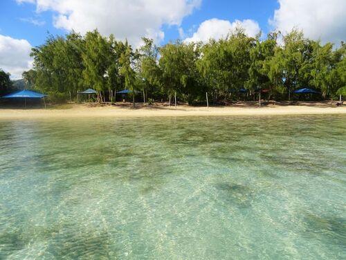 Excursion dauphins et île aux Bénitiers