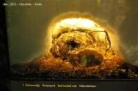 Siida-faune hibernation