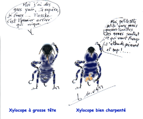 entomologie facile