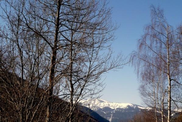 v02---Arbre-en-montagne.JPG