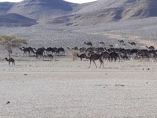 Un beau troupeau