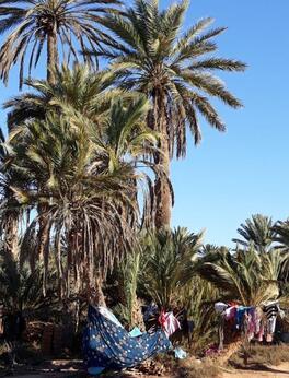 Dans la palmeraie, jour de lessive