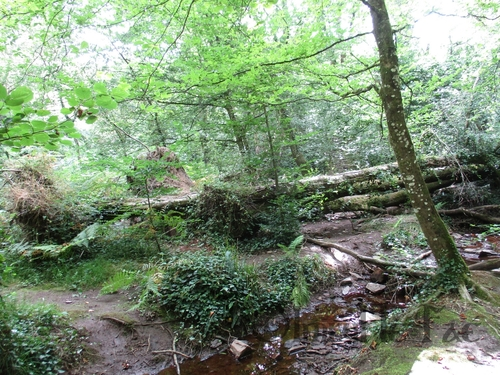Forêt du Val Sans Retour