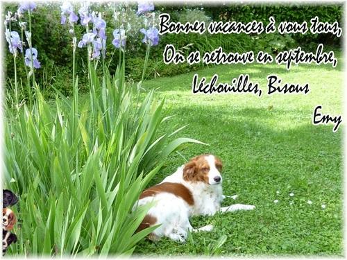 Ce sont les vacances, non à l'abandon de nos animaux !!