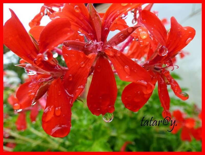 Pluie du dimanche !!!!......
