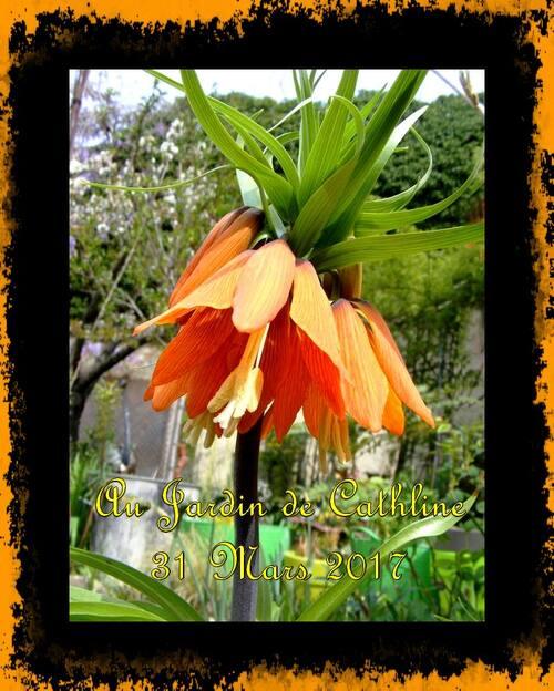 Une couleur que j'aime au jardin