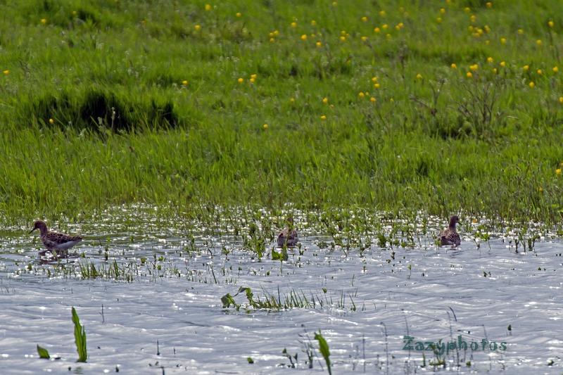 Dans un pré inondé