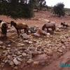 de ouzoud à el ksiba - les ânes - 2