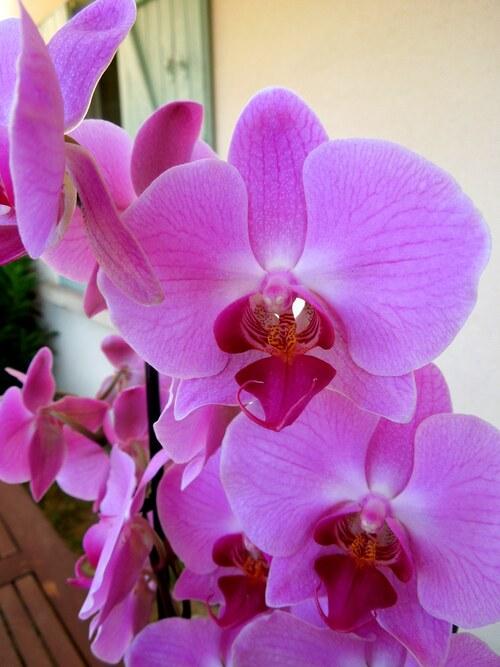 Les orchidées, 2