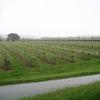 Les verges de la plaine de Garonne
