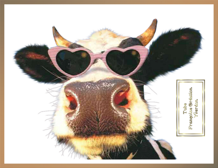 Vaches Humoristiques (11 à 20)
