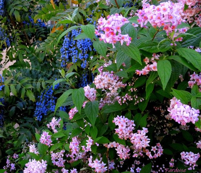 Le rose et le bleu ou le rose ou le bleu