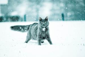 un chat dont le pelage était aussi sombre que la nuit