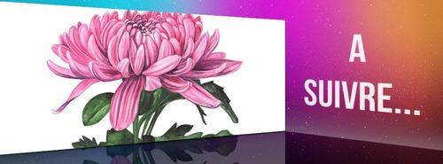 Dessin et peinture - vidéo 3556 : Peindre une fleur de chrysanthème sur papier aquarelle et support aquabord 1/2 - aquarelle.