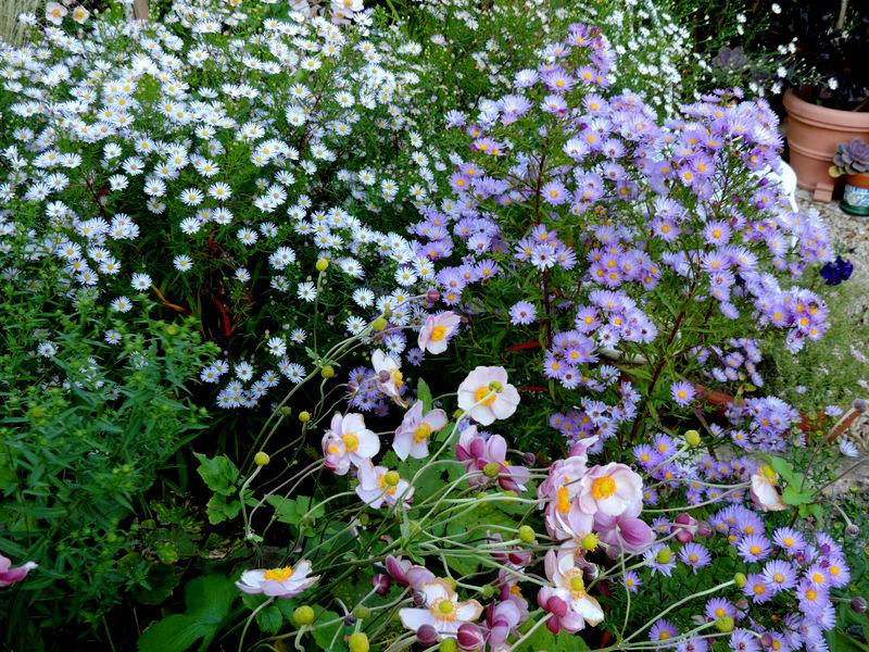 Le jardin et ses couleurs d'automne...