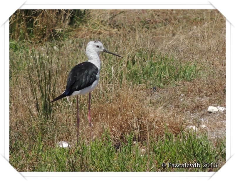 Pause ornithologique estivale au Teich - 8/12