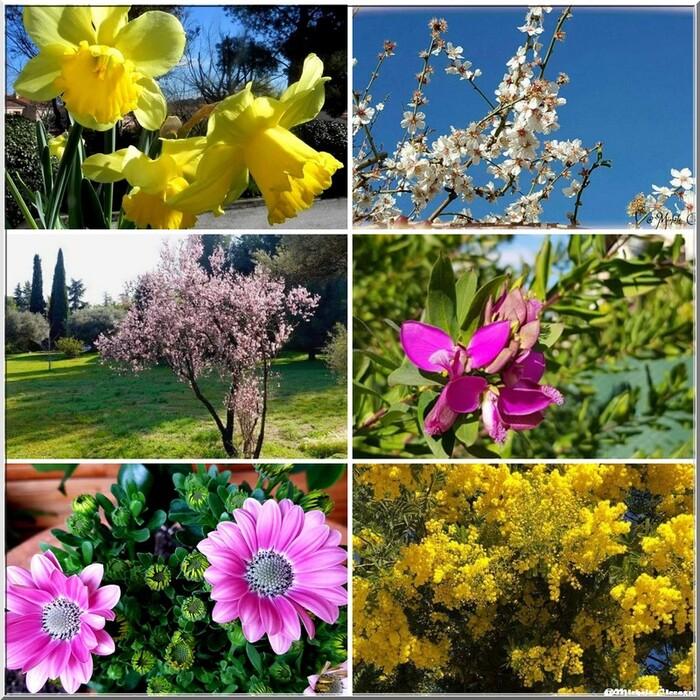 Le printemps en avance sur Toulon (depuis le mois de février)