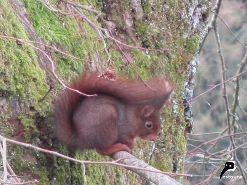 L'écureuil et la feuille de Maurice Carême